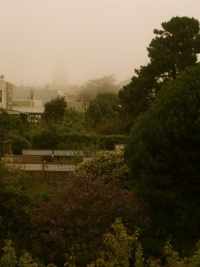 View of backyard on a foggy day.